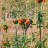 I know its... blurry... but its still a beautiful bird.