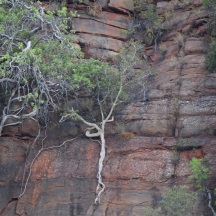 trees growing out of cliffs