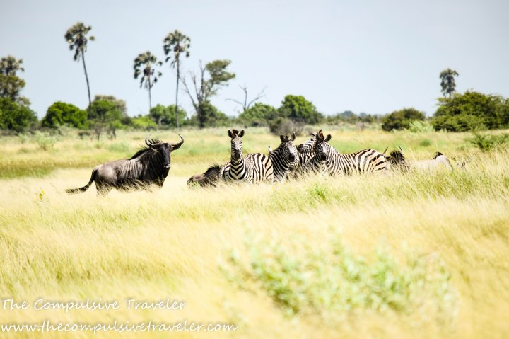 Botswana: The Road TripEdition.