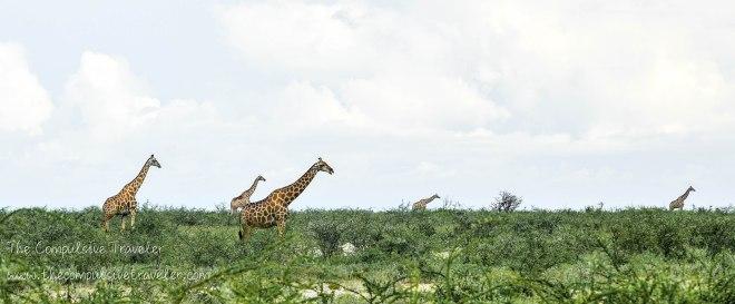 Giraffe Horizon