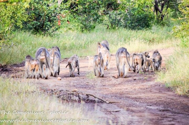 Victoria Falls: The Road Trip Edition (Part2).
